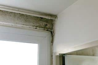 Managing Mold Issues For Fixed Site Facilities for Supervisors and Managers for Construction