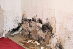 Mold for All other Trades for Supervisors and Managers for Construction