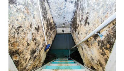 Mold Maintenance Procedures for Supervisors and Managers for Construction